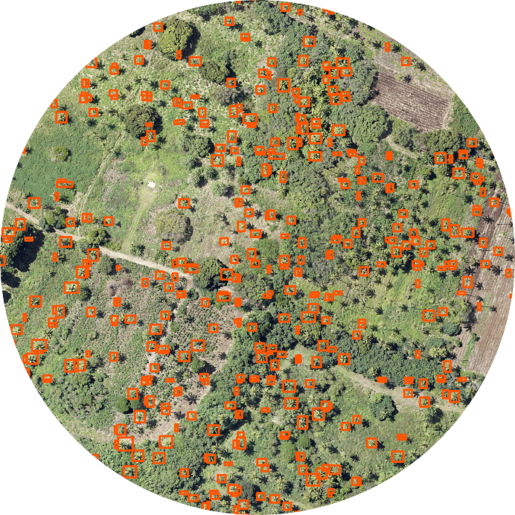 Using AI to detect palm trees